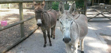Lenny and Charlie our two jovial donkeys at the Children's Zoo, Walton Hall and Gardens. Picture by Darren Moston.