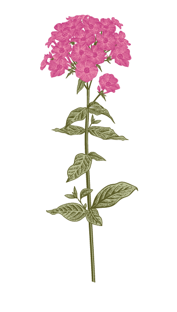 An illustrated flower
