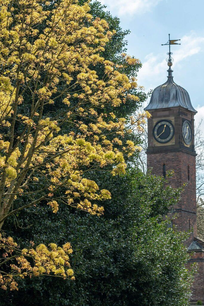 Walton Hall and Gardens clock tower in spring
