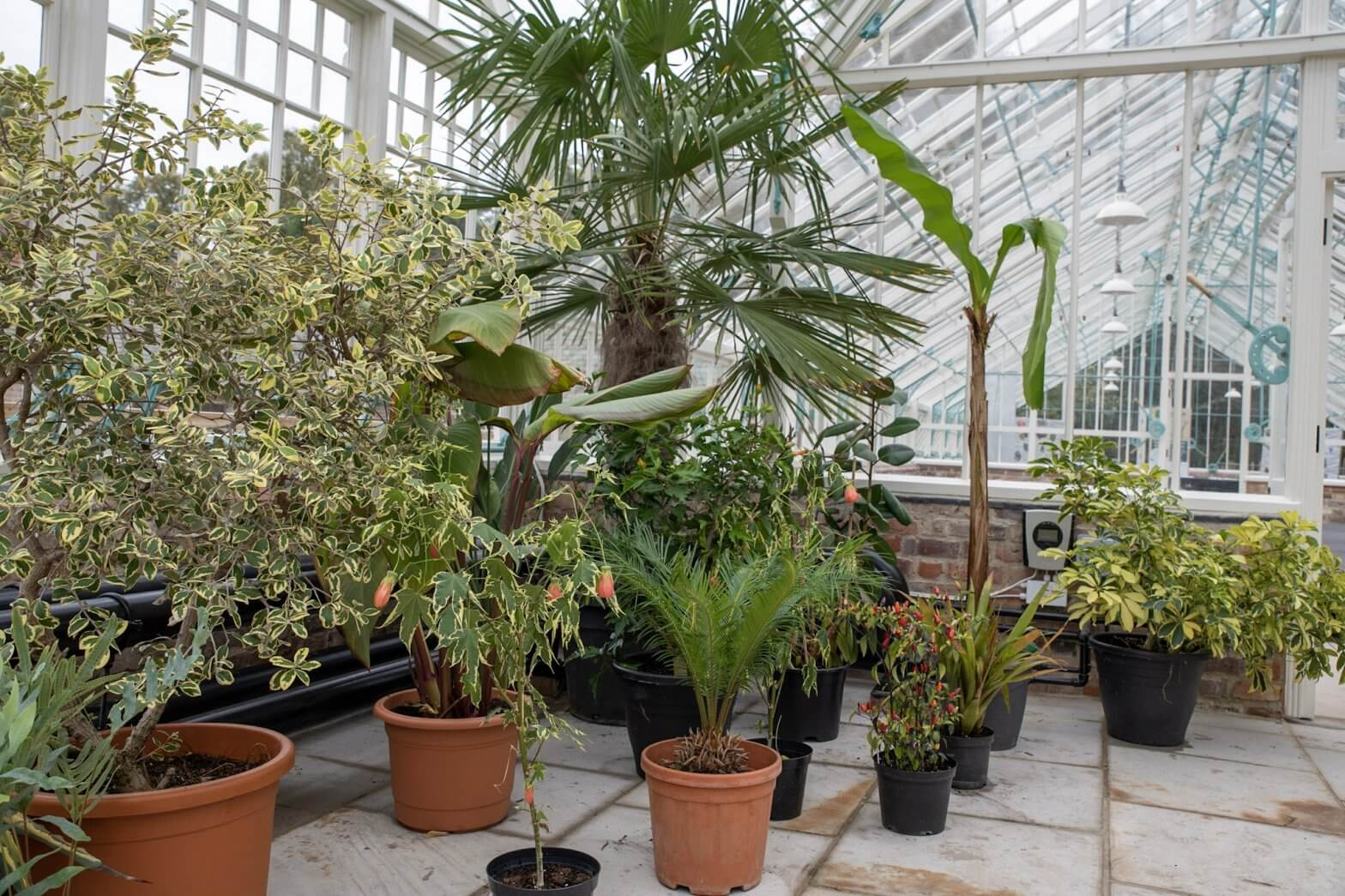 A picture of numerous plants inside our glasshouses. Regularly check our job board for job opportunities.