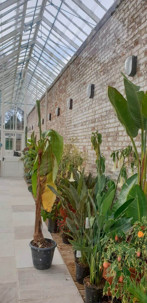 Plants in place inside the conservatories