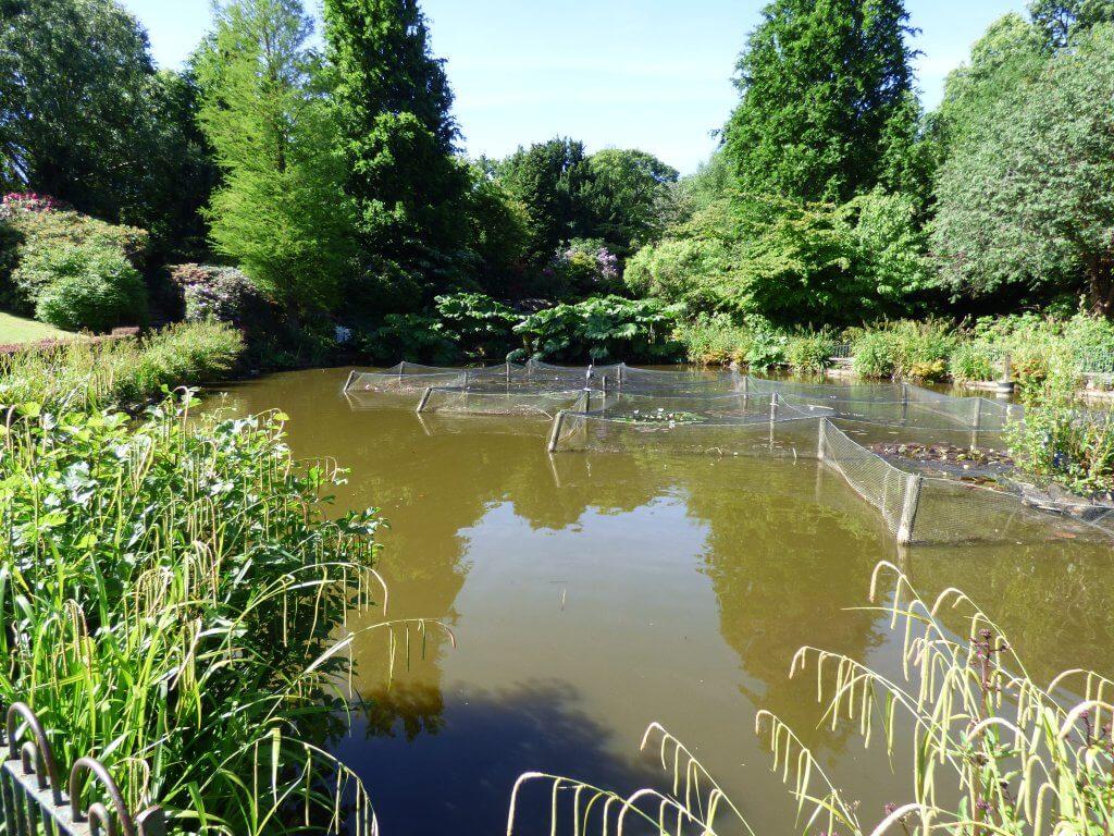 Walton Hall and Gardens Pond