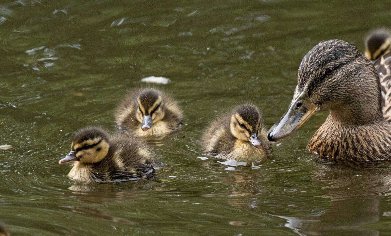 Wildlife snap by Andy Gilbert at Walton Hall and Gardens