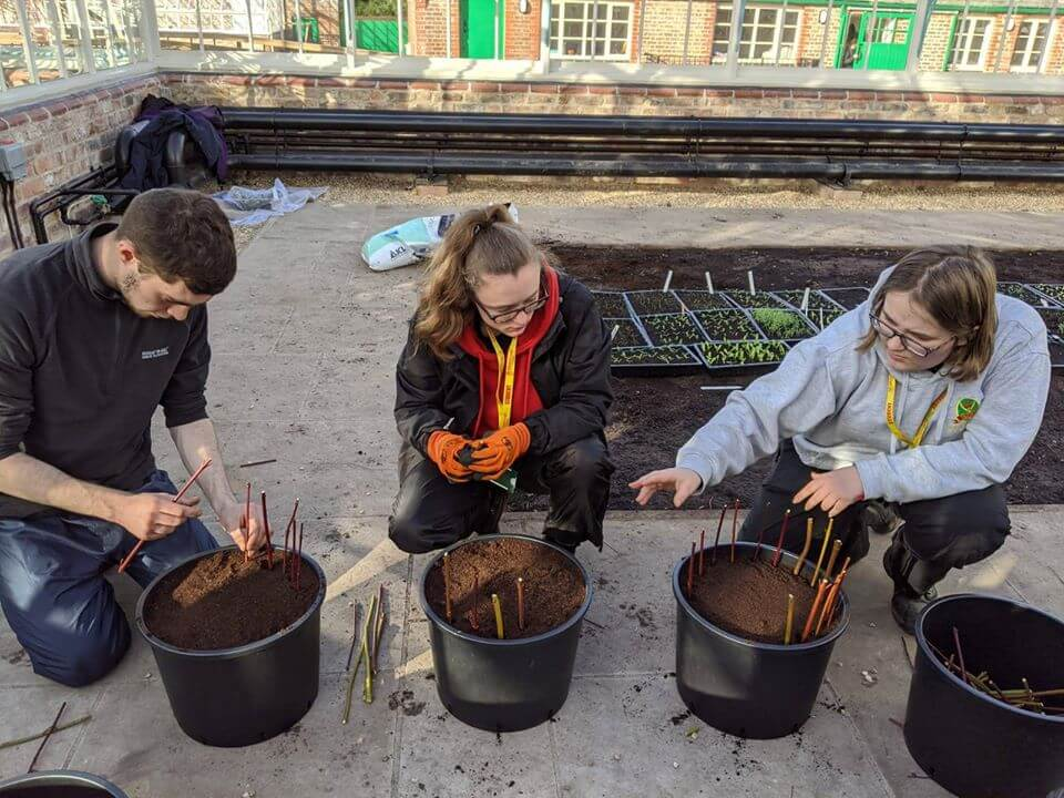 Myerscough student learning in the Glasshouses