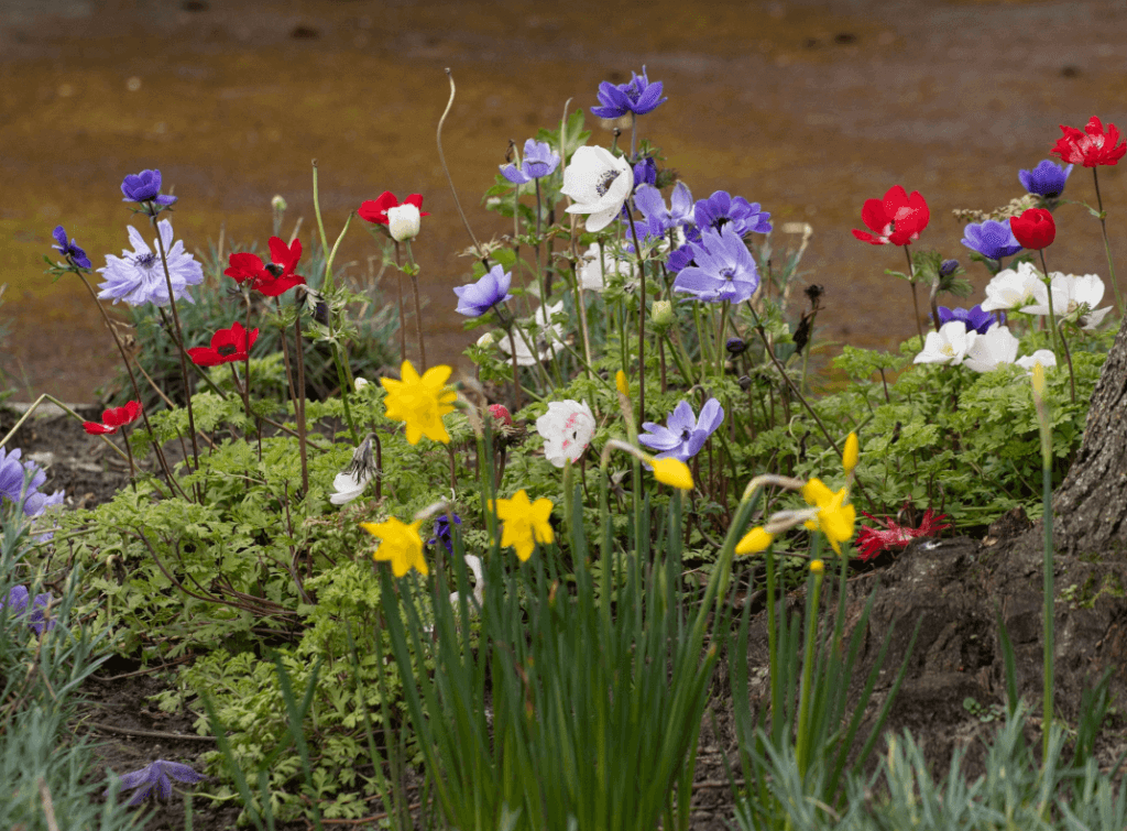 Spring flowers at Walton Hall and Gardens