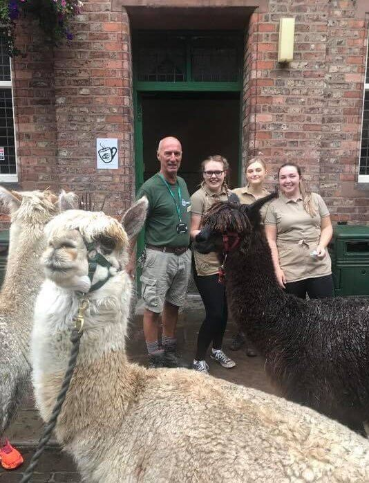Alpacas at the Heritage Cafe
