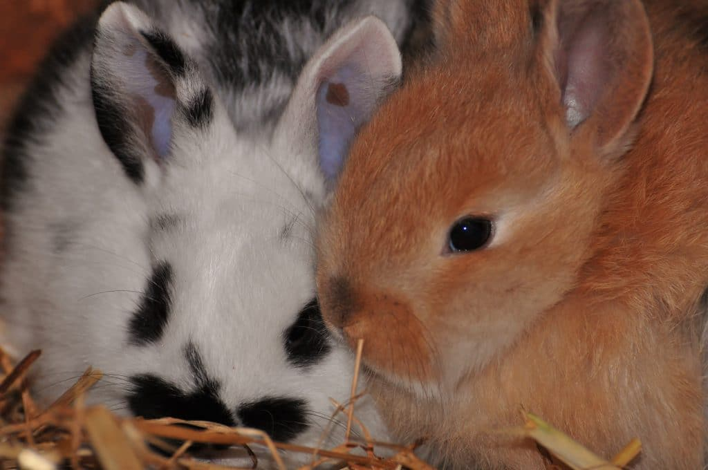 Rabbit friends for life at the Children's Zoo, Walton Hall and Gardens
