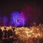 Illuminated trees at Christmas