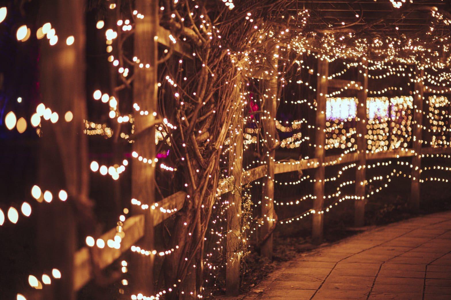 Illuminate at Walton Hall and Gardens