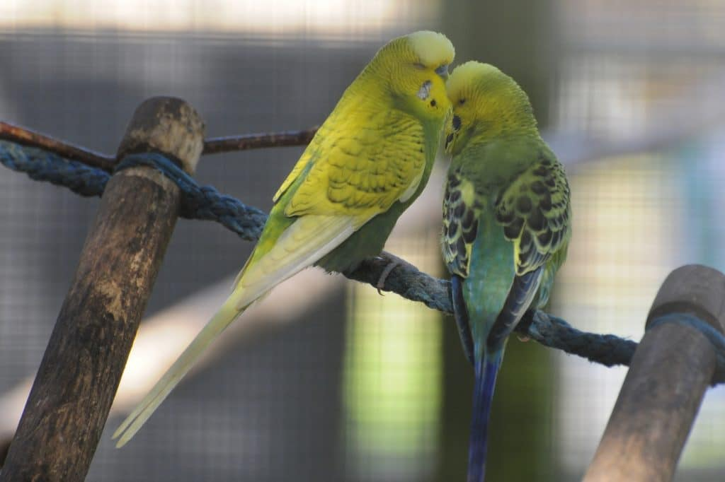 Two wee love birds at Walton Hall and Gardens Children's Zoo
