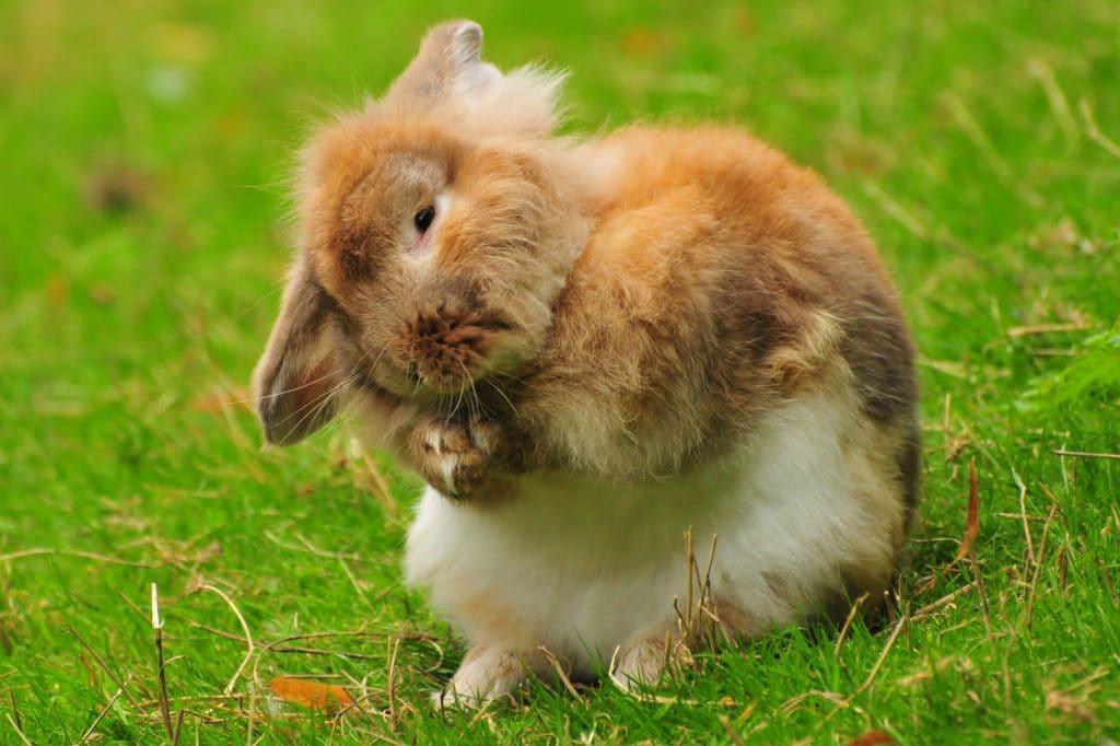 Fluffy rabbit - part of the Autumnal Children's Gallery